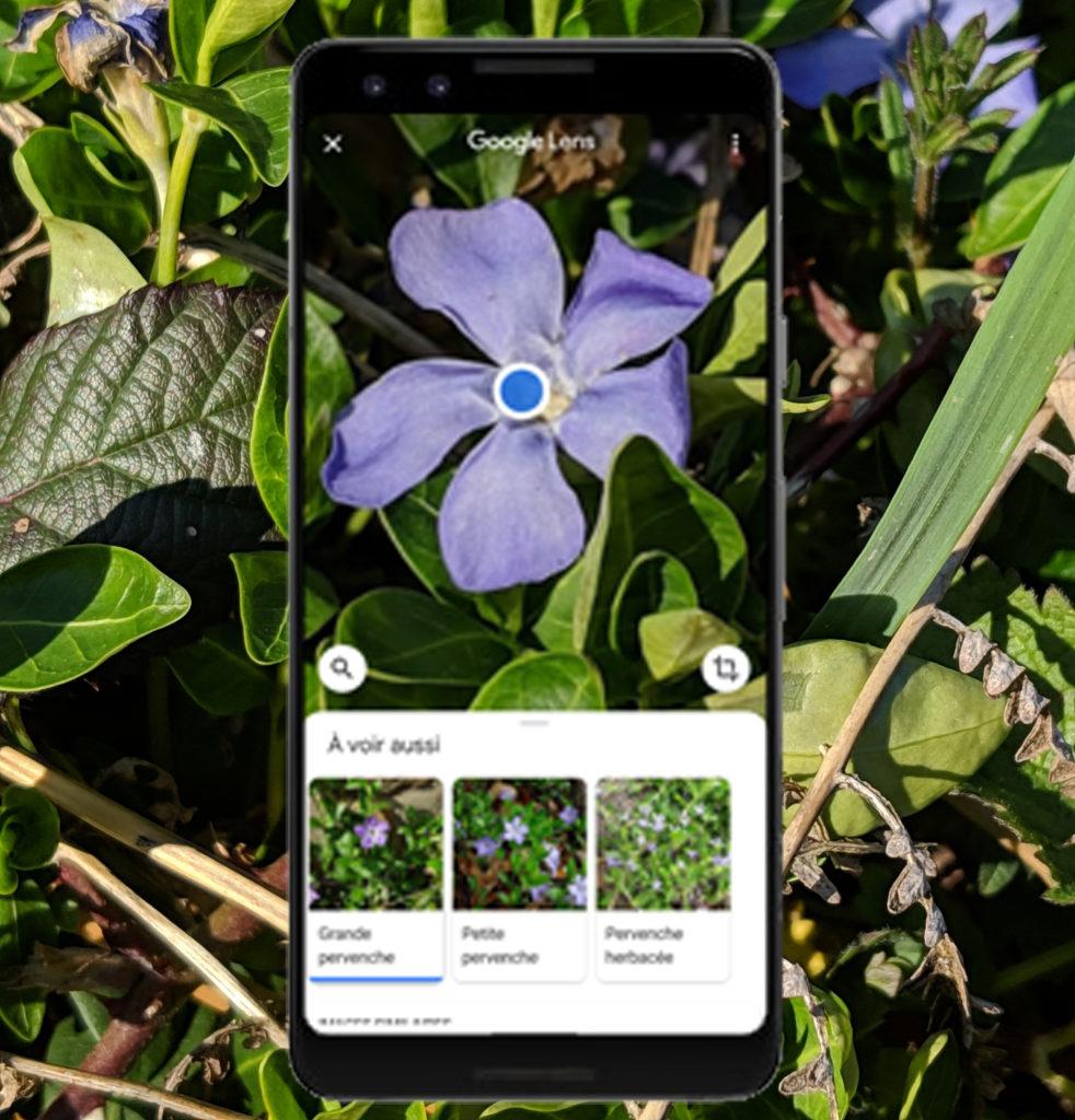 Image fleurs test mobile lab's